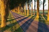 tree shadow pattern on bike road in morning sunlight Netherlands poster