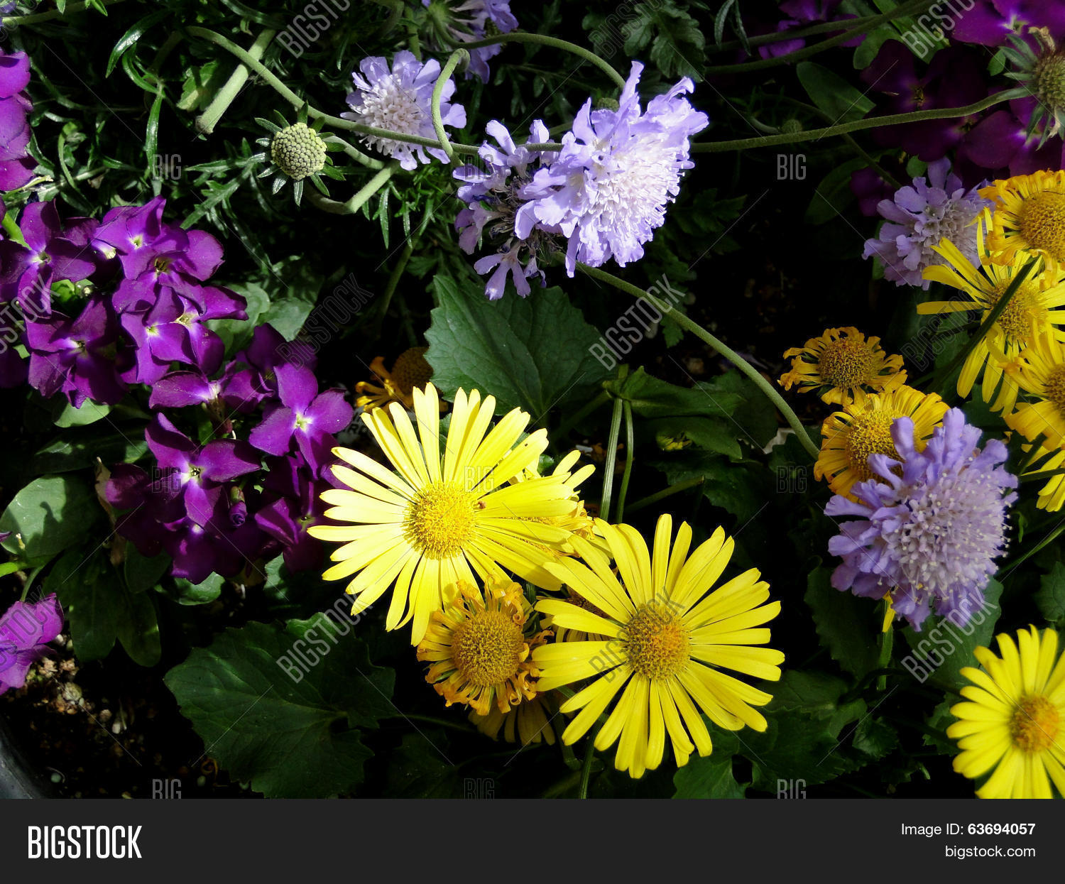 Yellow Purple Flowers Image Photo Free Trial Bigstock