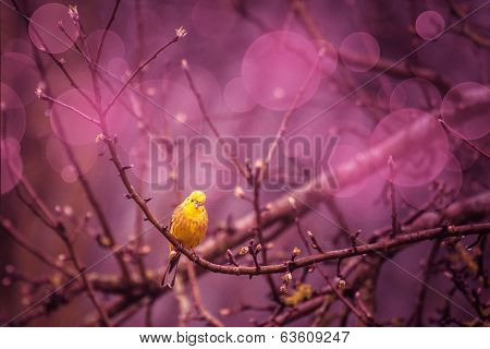 Yellowhammer Siiting On A Branch In A Purple Inviroment