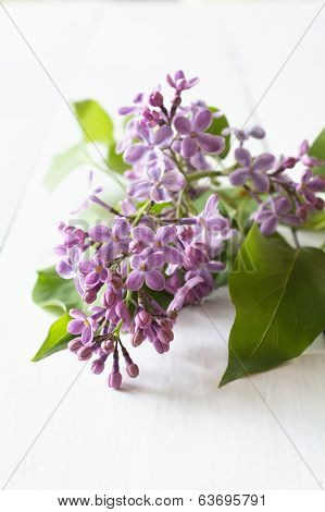 Spring Purple Lilac On White Table