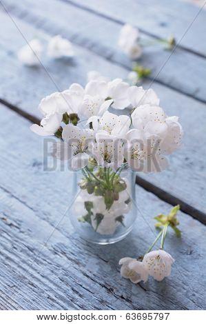 White Cherry Blossoms In Vase
