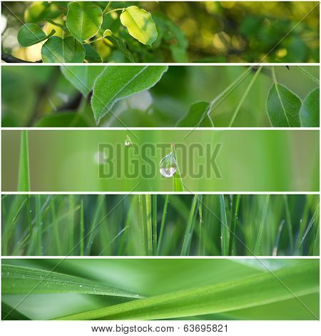 Spring Green Meadow Collage