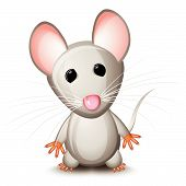 Little gray mouse isolated on white background poster