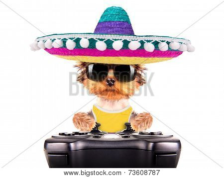 cute puppy dog wearing a mexican hat play on game pad isolated poster
