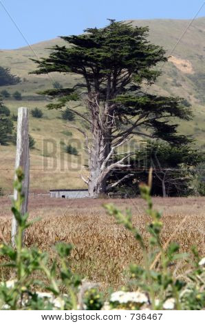 Bodega Tree