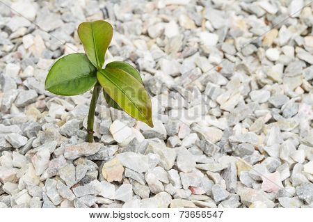 Seedling Plant On The Rock