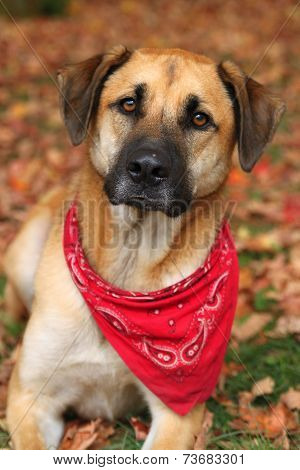 Large Mixed Breed Dog In Autumn