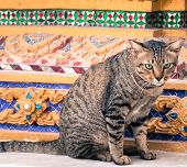 Abandoned cat standing around exterior of Buddhism temple see photograher poster