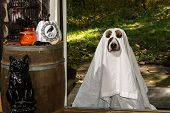 A dog dresses as a Ghost Trick or Treating poster