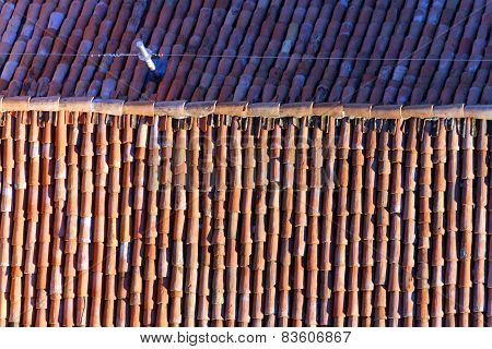 Terracotta Tiles To A Roof Of An Italian City With Lightning Rod