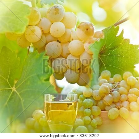 Riesling and wine