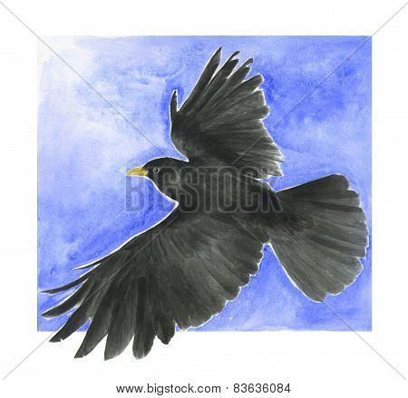 Black alpine chough bird