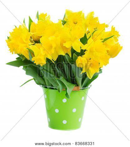spring narcissus