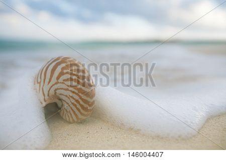 nautilus shell sea waves, live action ... , shallow dof