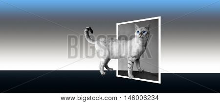 Snow Bengal In Black And White With Incredible Blue Eyes. Banner Format. 3D, Pop-out Photo Effect