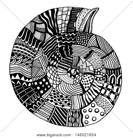 Shell, zentangle patterned seashell, black and white page for adult colouring book, doodle vector design