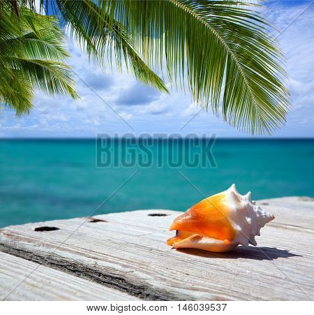 Sea shell on wooden background and caribbean sea.Sommer meer Landschaft.
