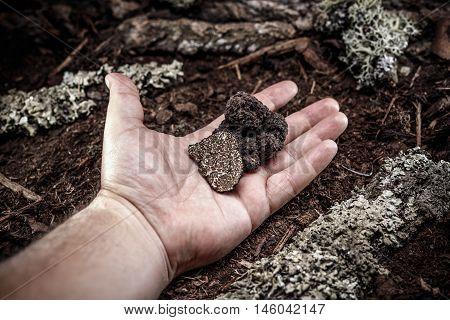 Man hand showing a black truffle mushroom