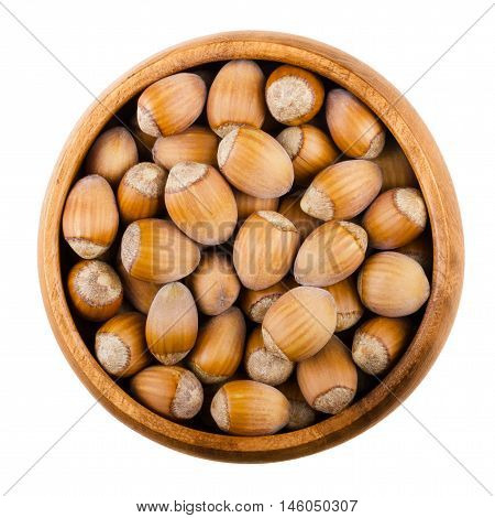 Common hazelnuts in a wooden bowl on white background. Ripe seeds of Corylus avellana, species native in Europe. Edible raw fruits with shells. Isolated macro food photo close up from above.