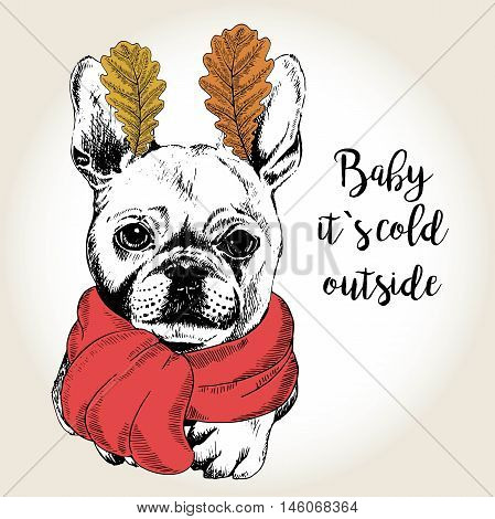 Vector close up portrait of french bulldog wearing the red scarf and oak leaf ears. Hand drawn domestic dog illustration. Baby it s cold outside. Autumn engraved funny illustration.