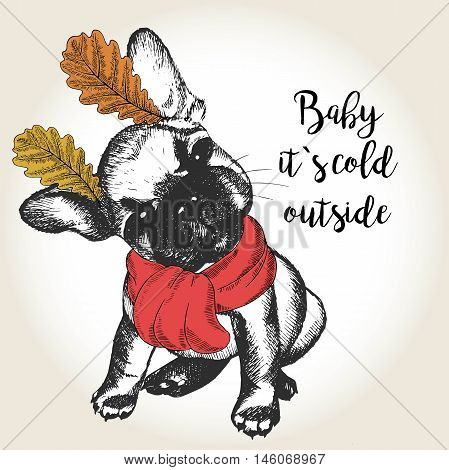 Vector close up portrait of french bulldog puppy wearing the red scarf and oak leaf ears. Hand drawn domestic dog illustration. Baby it s cold outside. Autumn engraved funny illustration.