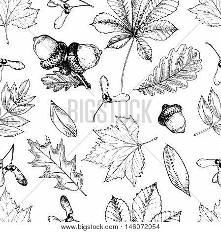 Vector seamless pattern with autumn leaves. Hand drawn vintage style engraved art. Oak mapple chestnut acorns. Use for textile design wrapping paper store
