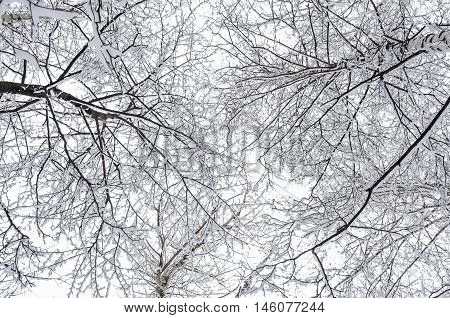 Interweaving Tree Branches