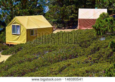 Tent Cabins surrounded by a rural mountain landscape with trees and plants taken in Mt Baldy, CA