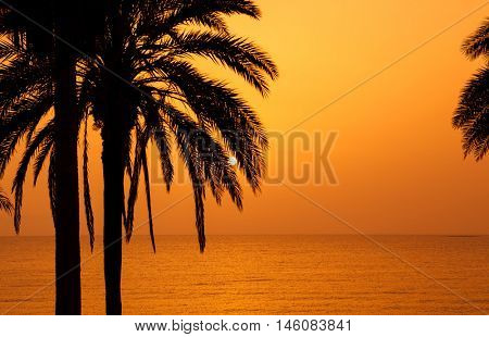 Palm trees silhouette at sunset, Tenerife, Spain