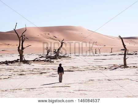 Person walking among Dead Camelthorn (Acacia erioloba) Trees in Dead Vlei Namib-Naukluft National Park Namibia
