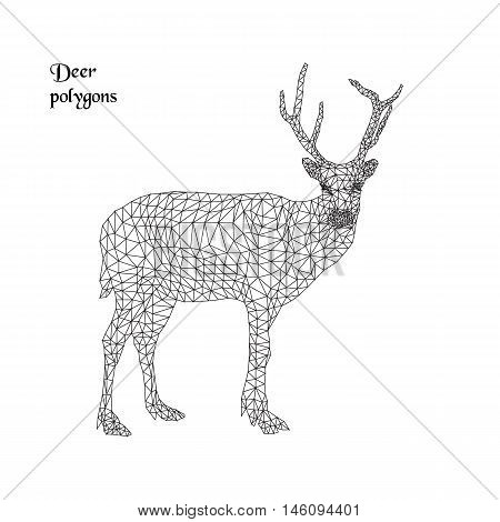 Deer with horns, vector contour polygons. Low poly illustration