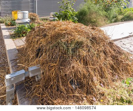 Pile of straw mulch in rooftop garden