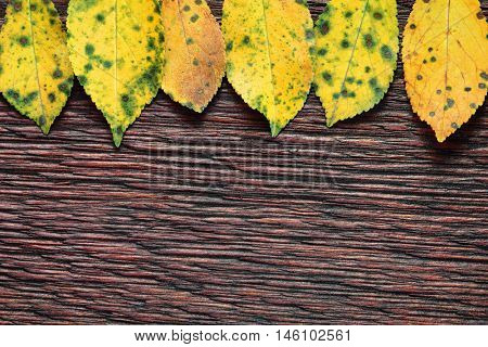 Autumnal leaves on old wooden texture background with copyspace