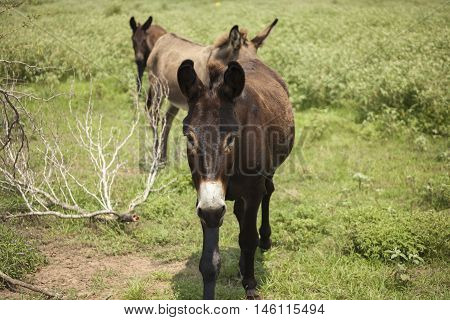 Three donkeys on a trail follow each other.