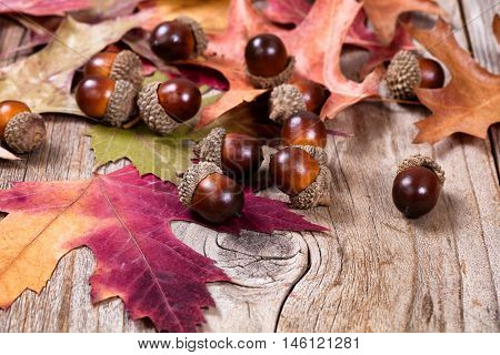 Close up view of seasonal autumn leaves and acorns on rustic wooden boards. Selective focus on front acorns.