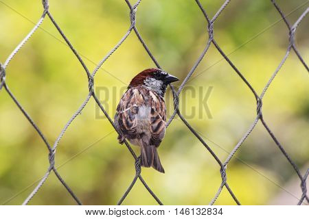 Bird perched on a chain link fence