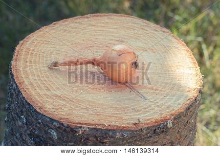 Vintage photo Fresh natural unpeeled onion lying on wooden stump in garden on sunny day healthy nutrition