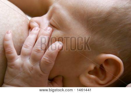 Close Up Of Newborn Baby Near Breast