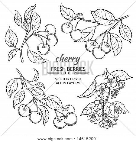 cherry flowers and berries vector set on white background