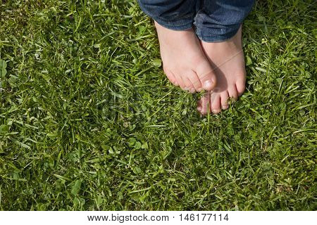 Top view on kid's bare feet on the green grass. Little boy standing on the grass in the park on a sunny day. Child's bare feet. poster