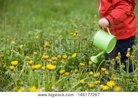 Little toddler in red jacket standing on green grass and watering dandelions from toy watering can. Child helping in the garden. Boy with watering can in the park. Outdoors activities with children