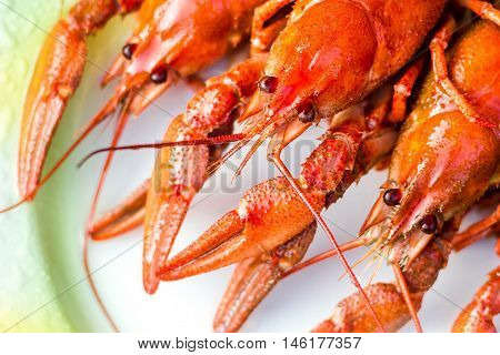 Boiled red crayfishes ( Astacus astacus ) on a white dish close-up selective focus.
