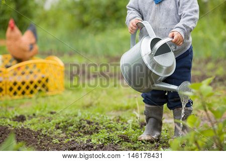 Cute little toddler boy watering plants with watering can in the garden. Adorable little child helping parents to grow vegetables and having fun. Activities with children outdoors.