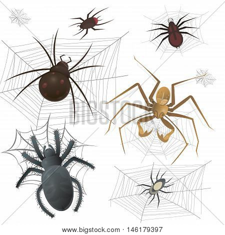 Set of spiderweb with spiders. Arachnid insect collection. Vector Illustration on white background