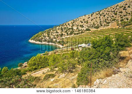Vineyard and beach of Brac island coast Dalmatia Croatia