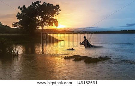 Hippopotamus in the Nile river at sunrise at the Murchison Falls National Park in Uganda Africa