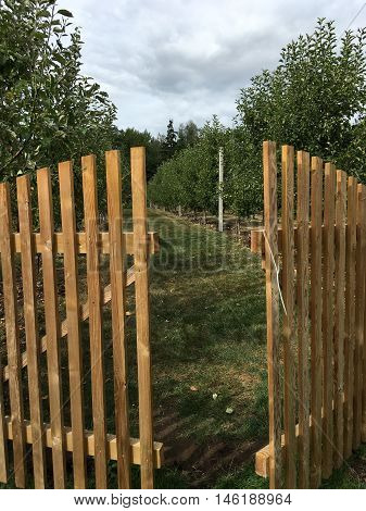 ajar wooden gate into the garden with young trees planted in a row