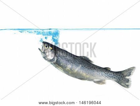 trout jumping into water on white background