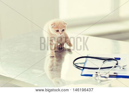 medicine, pets, animals, cats and health care concept - close up of scottish fold kitten and stethoscope with clipboard on table at vet clinic
