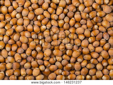 Pile of common hazelnuts. Ripe seeds uf Corylus avellana, native in Europe. Heap of edible raw nuts with shells. Isolated macro food photo close up from above.